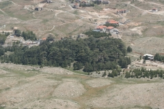 CEDARS-FOREST-4-min